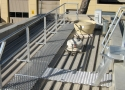 aluminium-walkways-handrails